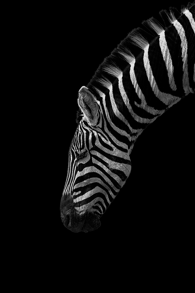 Image of   Black and White Stripes af Mikkel Beiter