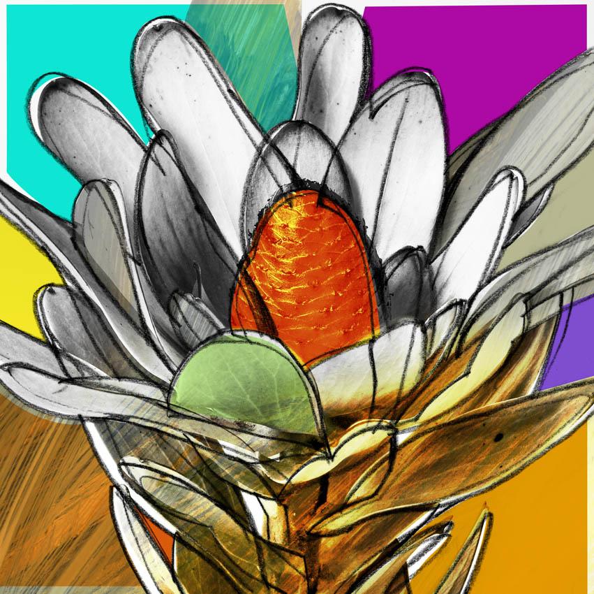 Image of   Botany colour af Nils Henrik Pedersen