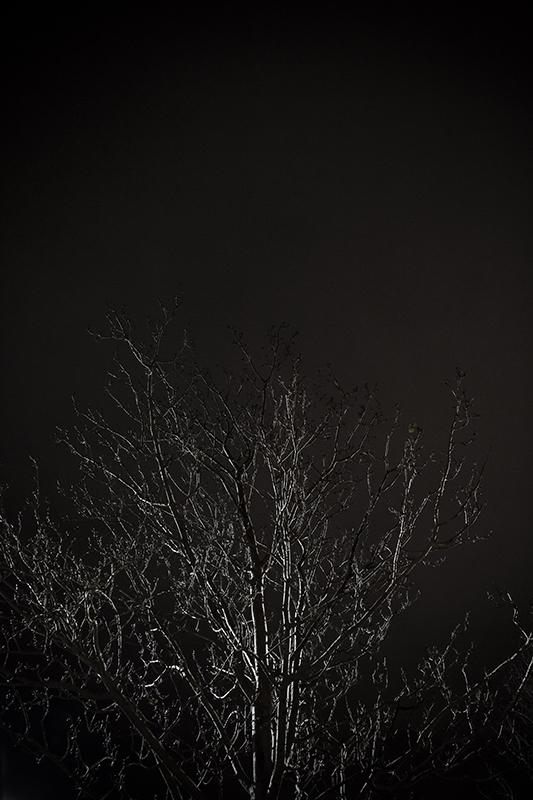 Enter Night af  Wilfred Gachau