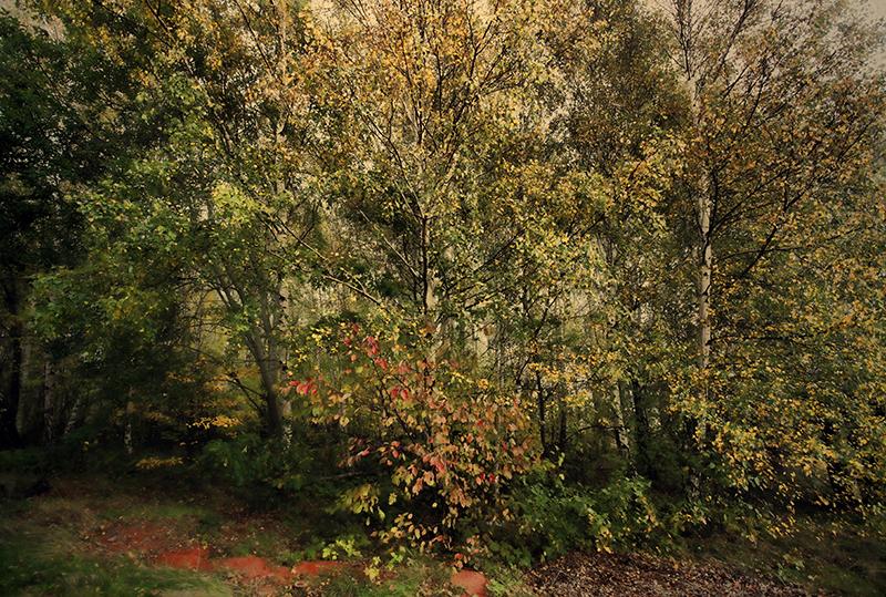 Billede af Forest af Gustavo Orensztajn