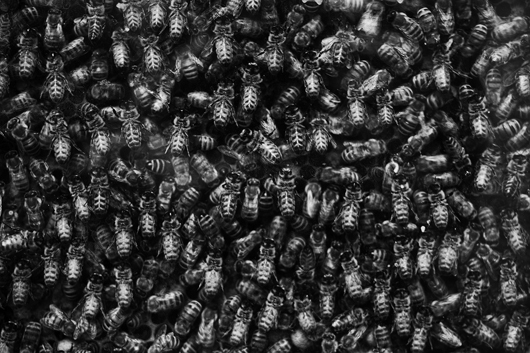 Image of   Bees af Gustavo Orensztajn