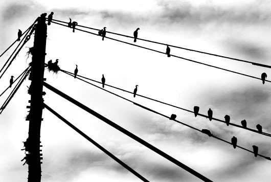 Image of   Birds on wires af Sarah Coghill
