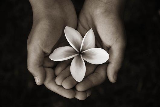 Image of   Hænder med blomst af Peter M Madsen