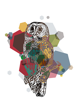 Image of   Owl af Jakub Stodulski