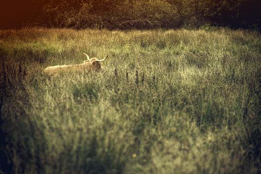 Image of   Pasture af Gustavo Orensztajn