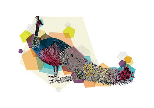 Image of   Peacock af Jakub Stodulski