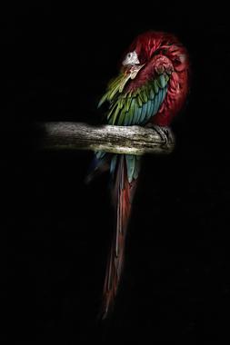 Billede af The Red Parrot af Gustavo Orensztajn