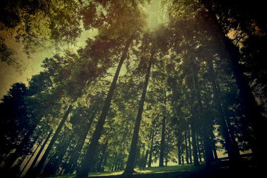 Billede af The Wood af Gustavo Orensztajn