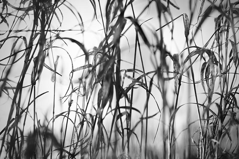 Image of   Natur3 af Preben Stentoft