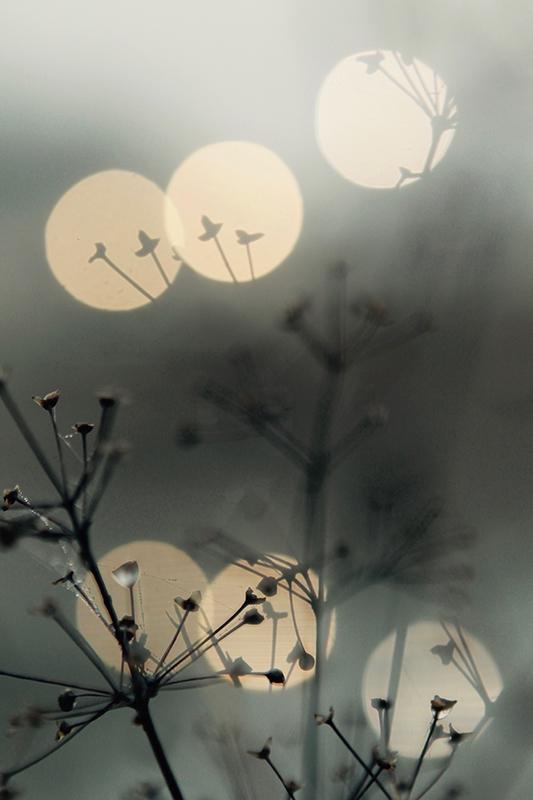 Image of   Natur5 af Preben Stentoft