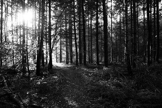 Image of   Path of light af Kirsten Stigsgaard