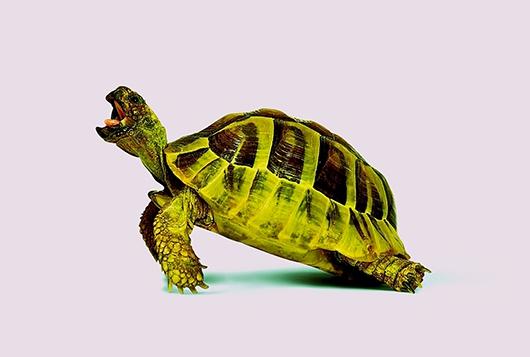 Image of   Purple Turtle af Pernille Westh