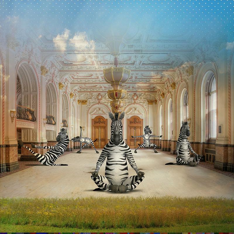 Image of   Zenbra af Helt Sort